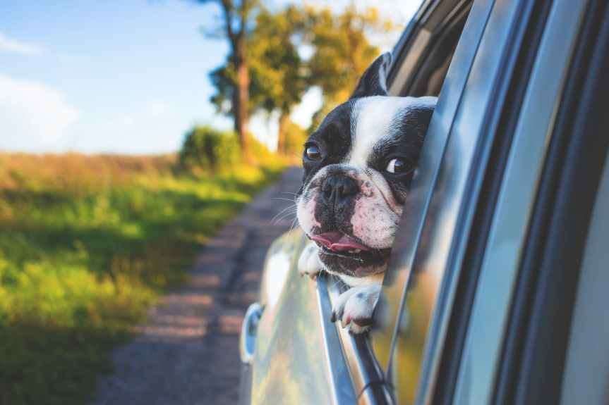 How To Travel With Pets During A Road Trip